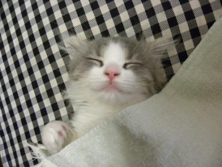 いい夢見てる?