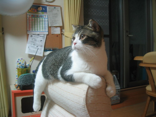 お気に入りの座椅子